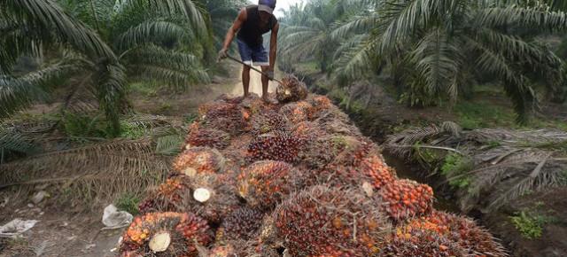 L'empreinte écologique et sanitaire de l'huile de palme